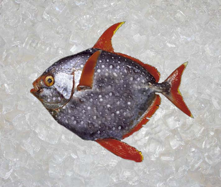 Seafood new zealand caviar roe theodore for Opah fish price