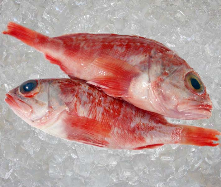Seafood france round fish theodore for Sea perch fish